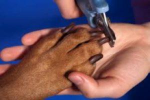 dog-nail-clipping